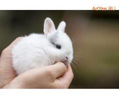 Мини Кролики (Есть срочная Доставка )